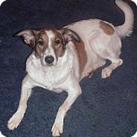 Hound (Unknown Type) Mix Dog for adoption in Claremore, Oklahoma - Maris