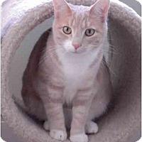Adopt A Pet :: Zoey - Jenkintown, PA
