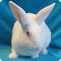 Adopt A Pet :: Bon Bon - Los Angeles, CA