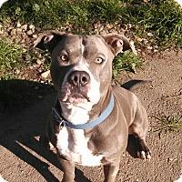 Adopt A Pet :: Ozzy - Bakersfield, CA