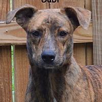 Adopt A Pet :: Gabi - Lake Pansoffkee, FL