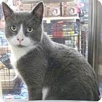 Adopt A Pet :: Dennis - Miami, FL