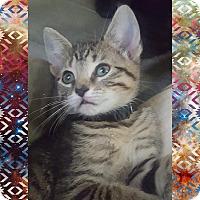 Adopt A Pet :: Gizmo - Chesapeake Beach, MD