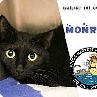 Adopt A Pet :: Monroe - Davenport, IA