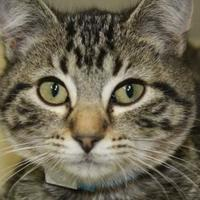 Adopt A Pet :: Merlin - Buffalo, WY