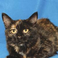 Adopt A Pet :: JUNIPER - Gloucester, VA