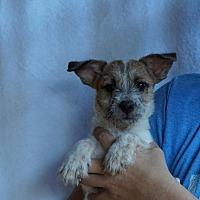 Adopt A Pet :: Zazu - Oviedo, FL