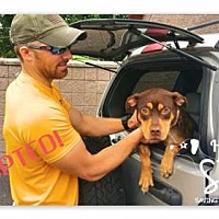 Adopt A Pet :: Brooklyn - ADOPTED - Northville, MI
