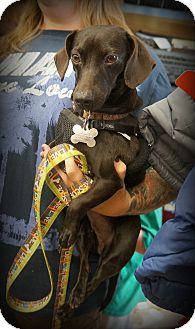 Dachshund Mix Dog for adoption in Homestead, Florida - Mia