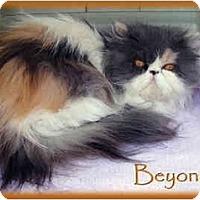 Adopt A Pet :: Beyonce - Beverly Hills, CA