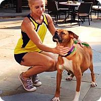 Adopt A Pet :: Candy - Turnersville, NJ