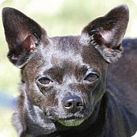 Adopt A Pet :: Bodie - Portola, CA