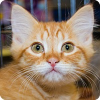 Adopt A Pet :: Louis - Irvine, CA