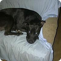 Adopt A Pet :: Arlo: Pending! (NJ) - Spring City, TN
