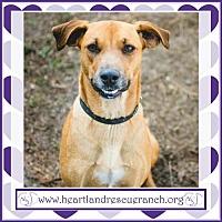 Adopt A Pet :: Trixie - Southport, FL