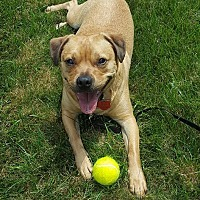 Adopt A Pet :: BUDDY - Sterling, MA