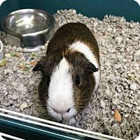 Adopt A Pet :: *Urgent* Todd - Fullerton, CA