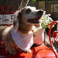 Adopt A Pet :: Mohina - Sioux Falls, SD