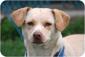 Labrador Retriever Mix Dog for adoption in Athens, Ohio - Wiggles