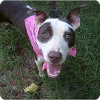Adopt A Pet :: Grace - Eden, NC