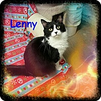 Domestic Mediumhair Cat for adoption in New Richmond,, Wisconsin - Lenny - Adoption Fee Waived