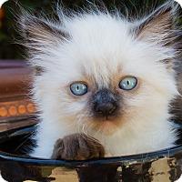 Adopt A Pet :: Charly - Irvine, CA