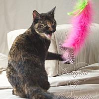 Adopt A Pet :: C.C. - Crescent, OK