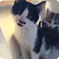 Adopt A Pet :: Pepe - Bronx, NY