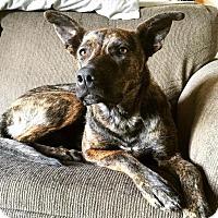 Adopt A Pet :: Franie - Saskatoon, SK