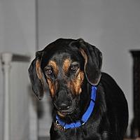 Adopt A Pet :: FINN - Palm City, FL