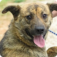 Adopt A Pet :: GPS - Richmond, VA