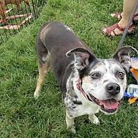 Adopt A Pet :: Wanda - Roswell, GA