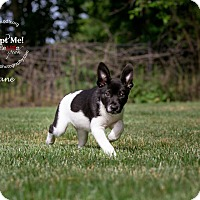 Adopt A Pet :: Jane - Warsaw, IN