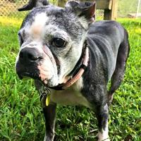 Adopt A Pet :: Available LULU - Greensboro, NC