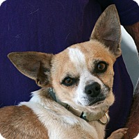 Adopt A Pet :: Smudge - Palmdale, CA