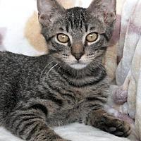 Adopt A Pet :: Upton - St Louis, MO