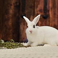 Adopt A Pet :: Sabina - Marietta, GA