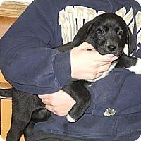 Adopt A Pet :: Diesel - Centerpoint, IN