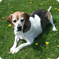 Adopt A Pet :: Lionel - North Olmsted, OH