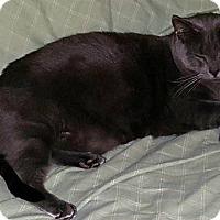 Adopt A Pet :: Donner - brewerton, NY