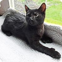 Adopt A Pet :: Bogart - N. Billerica, MA