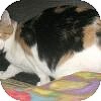 Domestic Shorthair Cat for adoption in Powell, Ohio - Echo