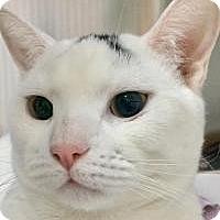 Adopt A Pet :: Jumper-I'm at Petsmart! - Manchester, NH