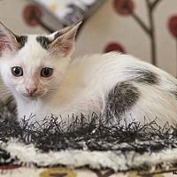 Adopt A Pet :: Sparkle - Huntsville, AL