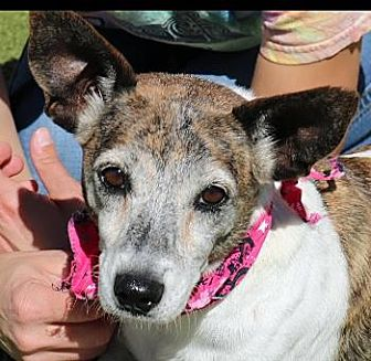 Terrier (Unknown Type, Small) Mix Dog for adoption in Wenatchee, Washington - Nelly