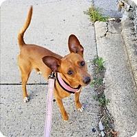 Adopt A Pet :: Charlie - Bronx, NY
