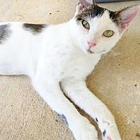 Adopt A Pet :: Aster - Umatilla, FL