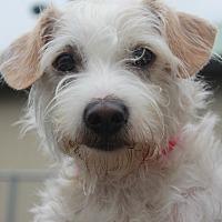 Adopt A Pet :: SEVEN - Clayton, NJ
