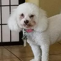 Adopt A Pet :: Diamond - Las Vegas, NV