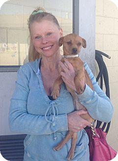Chihuahua/Pug Mix Puppy for adoption in Encinitas, California - Cherrylee